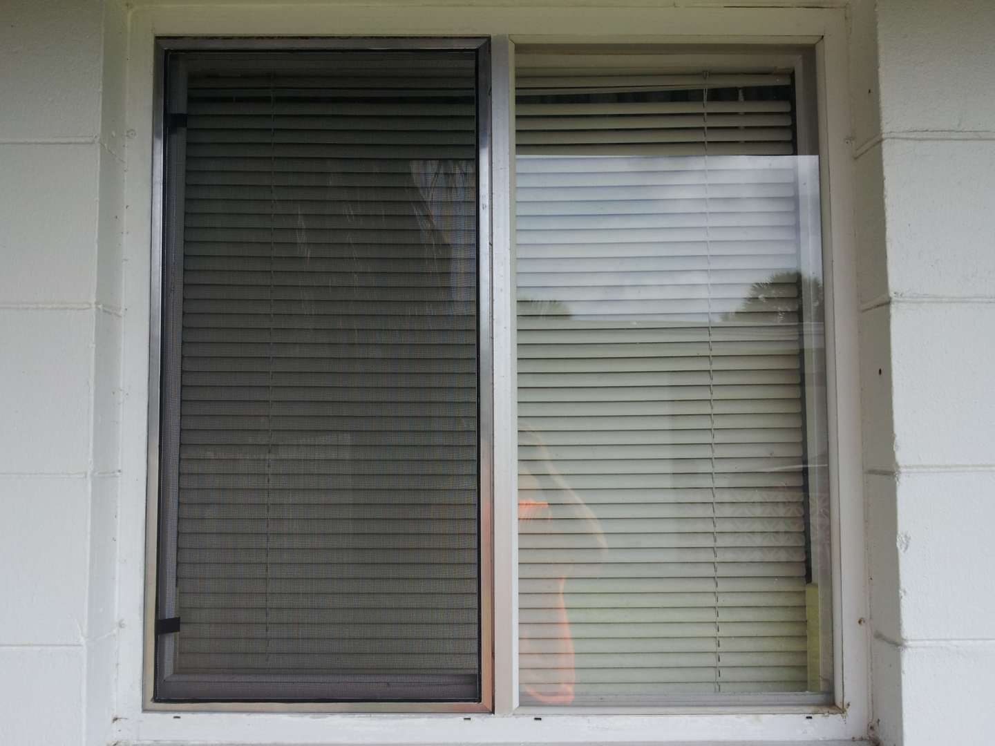 window-screen-05.jpg