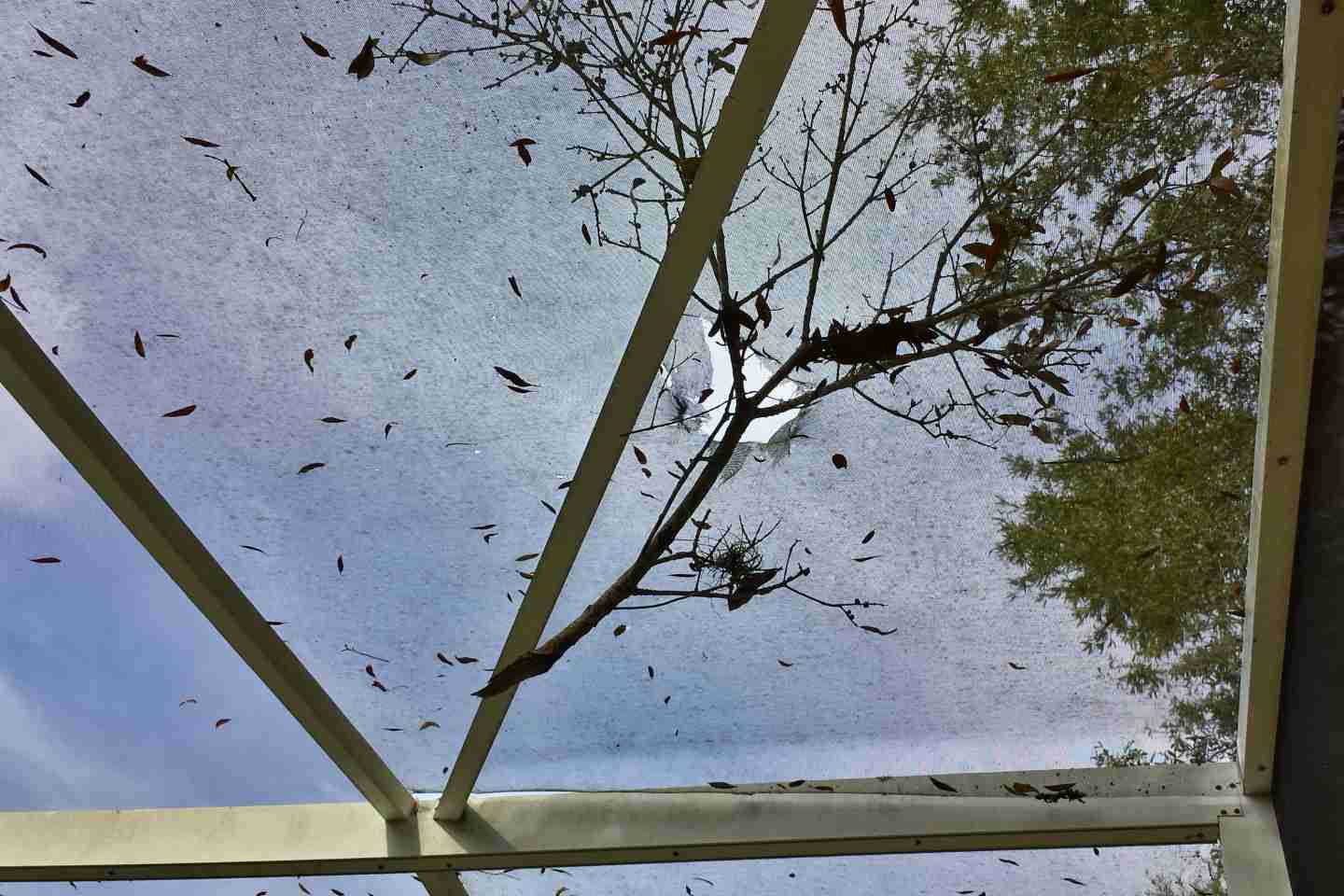 07-pool-enclosure-roof-screen-branch-damage.jpg