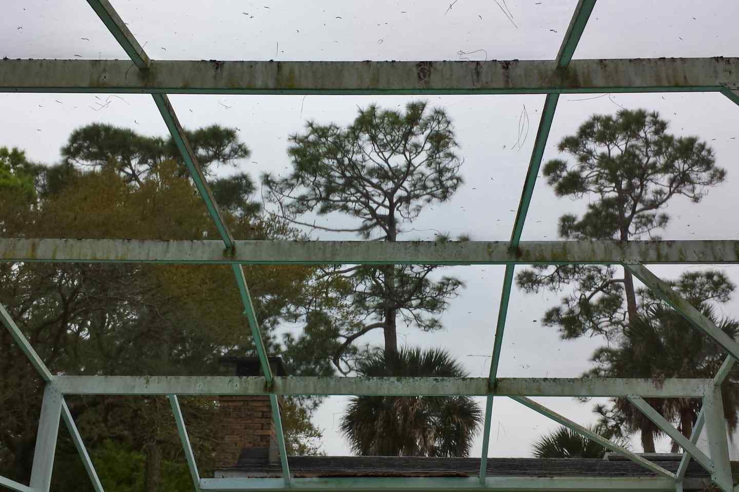 03-before-pressure-clean-pool-enclosure.jpg